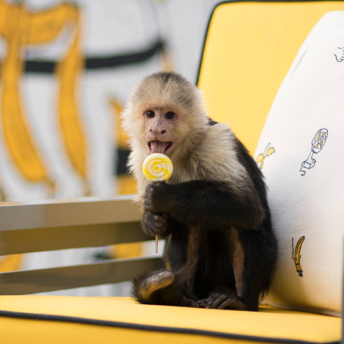 Graphic outdoor lounge chair with monkey.